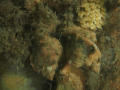 Fuikhorn met eitjes