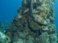 Mushroom koraal